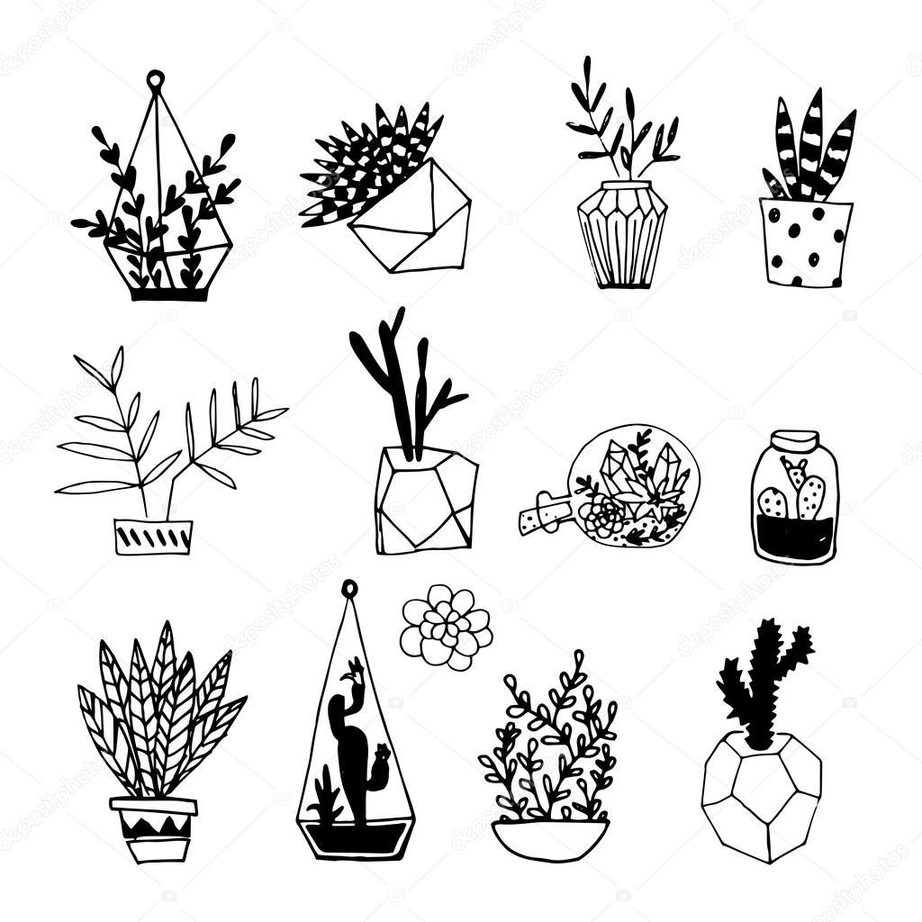 Zwart-wit cactus en vetplanten — Stockvector © lechernina ...