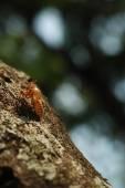 Cricket shell on bark — Stock Photo