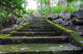 Spring time: step way in the garden — Stockfoto