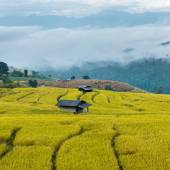 Terraced rice fields with fog in the morning at northern Thailan — Stock Photo