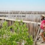 Thai women standing alone on the walkway bridge in Mangrove forest — Stock Photo #70617319