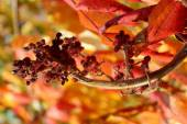 Wild bush in autumn colors. — Stock Photo