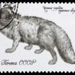 Fur-bearing animals — Stock Photo #60254747