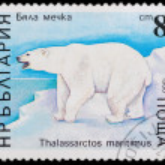 Polar bear — Stock Photo #60255159