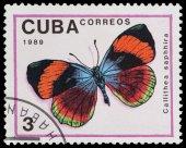Motýla — Stock fotografie