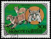 非洲动物 — 图库照片