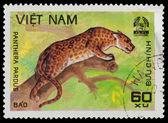 Panthera — Stock Photo