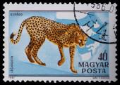 Stamp series wild animals — Stock Photo