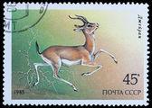 Endangered Wildlife — Stock Photo