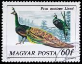 Stamp series Birds — Stock Photo