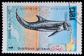 Stamp Shows Grampus Griseus — Stock Photo