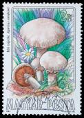 edible mushrooms — Zdjęcie stockowe