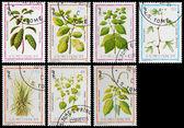 Medicinal plant — Stock Photo