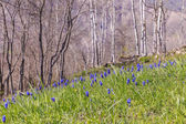 Wildflowers in the mountains near the village of Lahij — Stock Photo