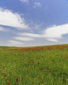 Poppy field.Ismaillinskie mountains. Azerbaijan — Stock Photo