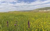 Spring in the mountains Gobustan.Azerbaijan — Stock Photo