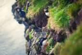 大西洋海雀 Latrabjarg 悬崖-西方大多数部分的与欧洲的最大鸟悬崖,冰岛上的美丽充满生气的画面 — 图库照片