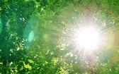 Sun among trees — Stock Photo