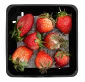 Moldy strawberries — Stock Photo