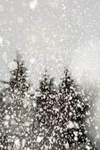 Snow-covered forest in the mountains — Stock Photo