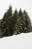 Foresta innevata in montagna — Foto Stock