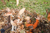 Kids playing in leaves — Stock Photo