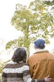 Coppie mature guardando un albero — Foto Stock