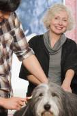 Veterinario toelettatura di un cane — Foto Stock