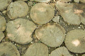 Tree trunk slices in the soil — 图库照片