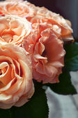 Beautiful wedding bouquet of apricot roses — Stock Photo