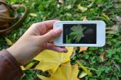 Taking picture of autumn leaf — Stock Photo