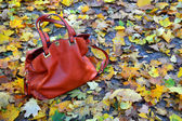 Red leather bag with a field of autumn leaves — Stok fotoğraf