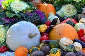 Different autumn vegetables: pumpkin, eggplant, zucchini, cauliflower — Stock Photo