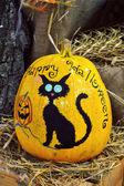 Halloween pumpkin Jack-o'-lantern with black cat — Stock Photo