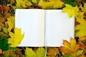 An empty notebook covered with autumn leaves — Stock Photo