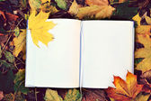 An empty notebook covered with autumn leaves — Stock fotografie