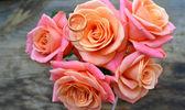 ピンクのバラの美しい結婚式の花束に 2 つのゴールデン婚約指輪 — ストック写真