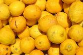 Lots of yellow lemons — Stock Photo
