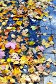 Foglie di autunno sul marciapiede — Foto Stock
