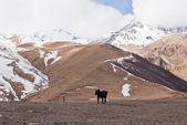 Kazbegi-Gergeti village mountains and dog — Stock Photo