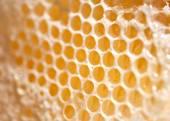 Beeswax — Stock Photo