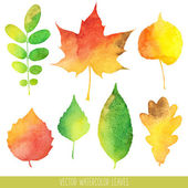 Vector watercolor autumn leaves — Stock Vector
