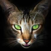 Cat face close-up — Stock Photo