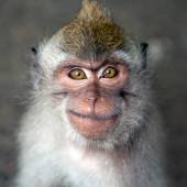 Monkey portrait — Stock Photo