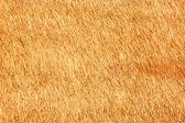 Thatch texture — Stock Photo
