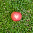 Red apple with a heart symbol on a grass — Stock Photo #66659609