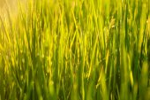 Grass blades with drops — Stock Photo