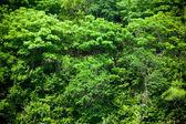Jungle tress — Stock Photo