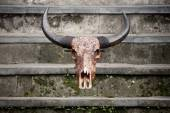 Carved bull scull on stone steps — Stock Photo