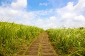Pathway in the grass — Stock Photo